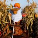 Scarecrows Park Appreciation
